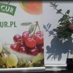 jabłoń miniatura