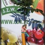 orzech włoski szczepiony