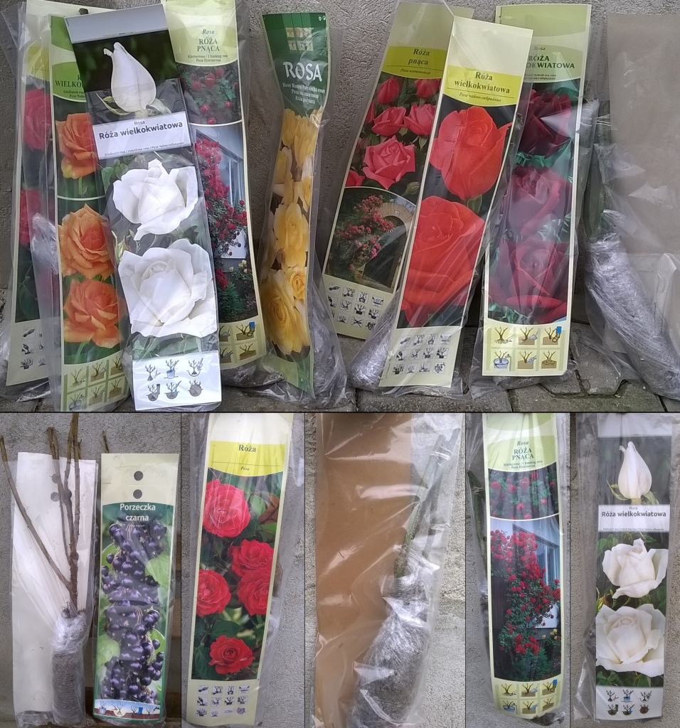 nowość róże i owocowe krzewy w kapersach